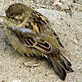 Little Bird in New York City